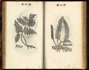 Kuva Elias Erici Til-Landzin vuonna 1683 julkaistusta kirjasta Icones novae. Kirjassa on yksinkertaiset mustavalkoiset puupiirrokset sadasta viidestäkymmenestä yhdeksästä Turun seudulla kasvaneesta kasvista.