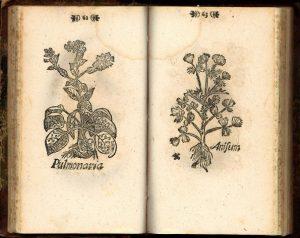 Elias Erici Til-Landzin vuonna 1683 julkaistusta kirjasta Icones novae. Kirjassa on yksinkertaiset mustavalkoiset puupiirrokset sadasta viidestäkymmenestä yhdeksästä Turun seudulla kasvaneesta kasvista.